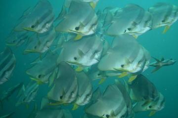 Racha Yai Dive Trip from Phuket