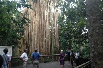 Rainforest and Waterfall Day-Trip from Cairns Including Crater Lakes, Millaa Falls and Zilliee Falls