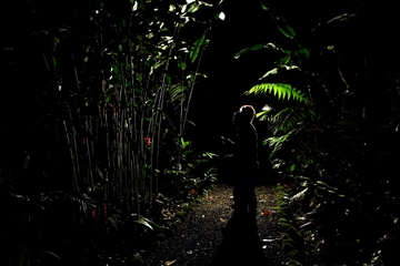 Rainforest Night Hike and Dinner from La Fortuna