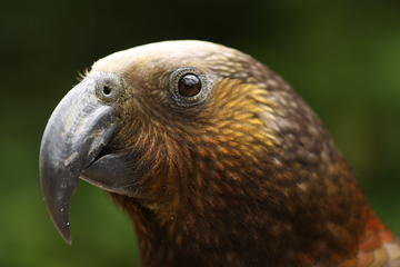 Rotorua Bird Watching Adventure
