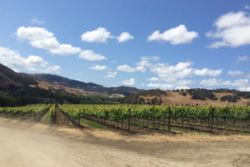 Santa Barbara Wine Lovers Tour