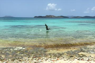 Shire Beach Snorkel Adventure In St Thomas Tourtipster