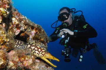 Scuba Diving Multi Dives in Playa de la Americas