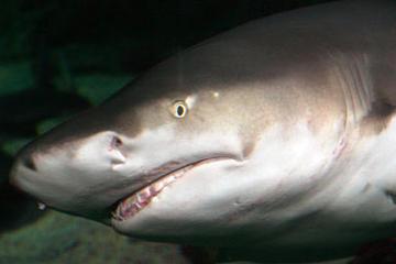 SEA LIFE Sydney Aquarium VIP Guided Behind the Scenes Tour