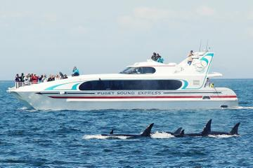 Seattle Whale Watching Tour