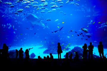 Sentosa S.E.A. Aquarium™ Admission in Singapore with Optional Hotel Transport