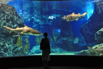 Siam Ocean World Bangkok Private Tour