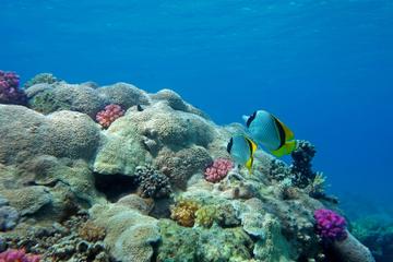 Sinbad Submarine Under The Red Sea