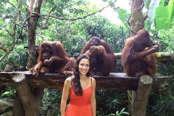 Singapore Zoo Morning Tour with optional Jungle Breakfast amongst Orangutans