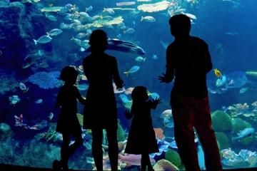 Skip the Line: Inbursa Aquarium in Mexico City