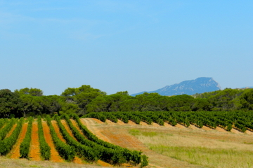 Small-Group Half-Day Languedoc Pic Saint-Loup Wine Tour from Montpellier