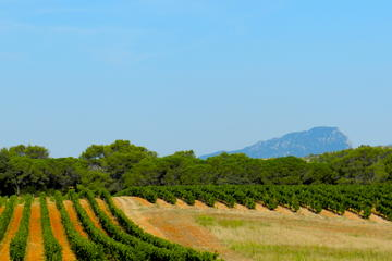 Small-Group Languedoc Pic Saint-Loup Wine and Olive Tour with Lunch