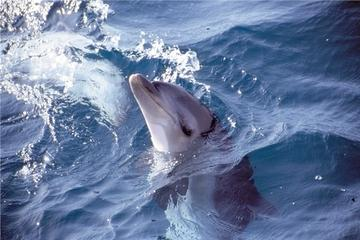 Small-Group Mornington Peninsula Tour from Melbourne with Dolphins and Seals Cruise
