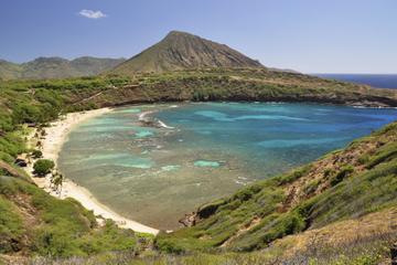 Small-Group Oahu Eco-Tour Including Waimea Valley Hike and Turtle Beach