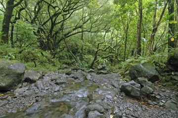 Small Group Tour: Waimea Valley Hike and Swim from Poipu