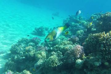 Snorkeling Trip to Tiran island by boat from Sharm El Sheikh