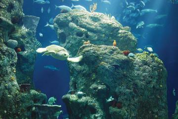 South Carolina Aquarium Admission