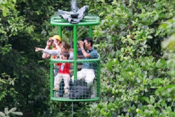 St Lucia Shore Excursion: Aerial Tram and Rainforest Tour