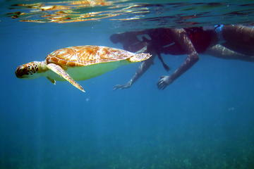 St Thomas Sea Turtle Snorkel Adventure Tour