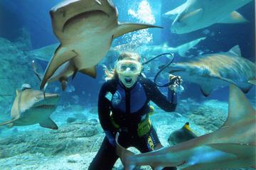 Sunshine Coast UnderWater World Entrance Ticket with Shark Dive Xtreme