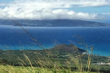 Tasting the Best of Maui Organic Farms Tour