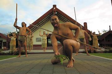 Tauranga Shore Excursion: Te Puia Maori Cultural Centre and Rotorua City Sightseeing