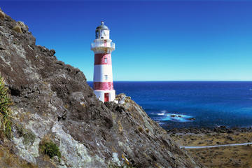 The Lord of the Rings and Palliser Bay Tour from Wellington
