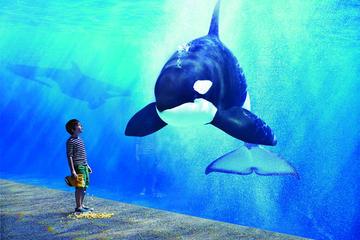 Theme Park Transportation: SeaWorld San Diego from Anaheim