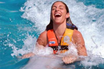 Tortola Dolphin Swim Adventure