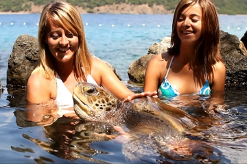 Turtle Encounter at Coral World Ocean Park in St Thomas