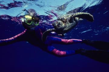 Turtle Reef Kayak Tour