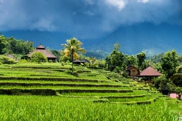 Ubud Rice Field Trekking Tour