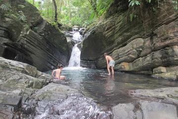 Viator Exclusive: Early Access to El Yunque National Forest Park with a Certified Tour Guide