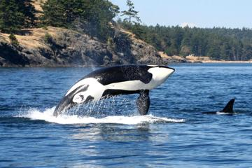 Victoria and Whale Watching