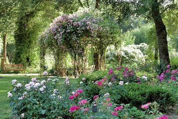Visit of the Rose Garden in Saumur