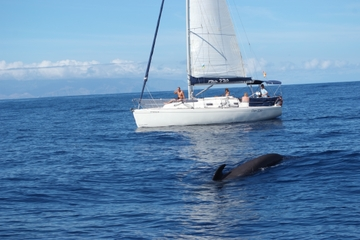 Whale and Dolphin Watching 3 hour Shared Charter