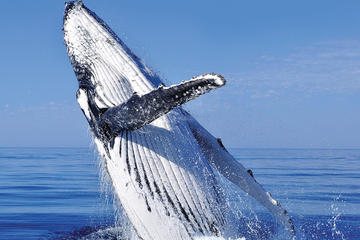 Whale Watching Combo in Cabo San Lucas: Sightseeing Cruise, Snorkeling and Shopping