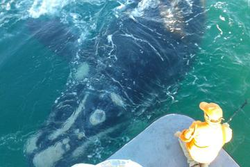 Whale Watching from Hermanus