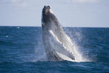 Whale-Watching Tour from Akureyri