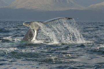 Whales Watching Tour from Punta Arenas