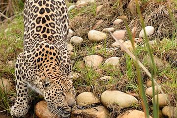 Wild Cat Photographic Tour