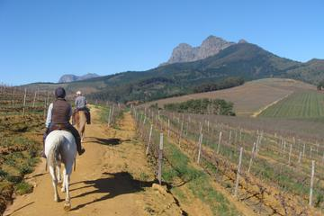 Wine Country Tour with a Twist from Cape Town