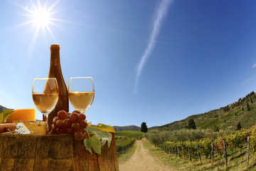 Wine Tasting Tour in the Tuscan's Hills from Pisa