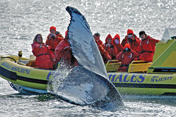 Zodiac Whale-Watching Adventure in Victoria